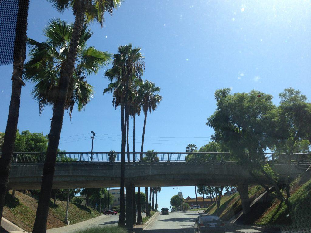 California palmy palms